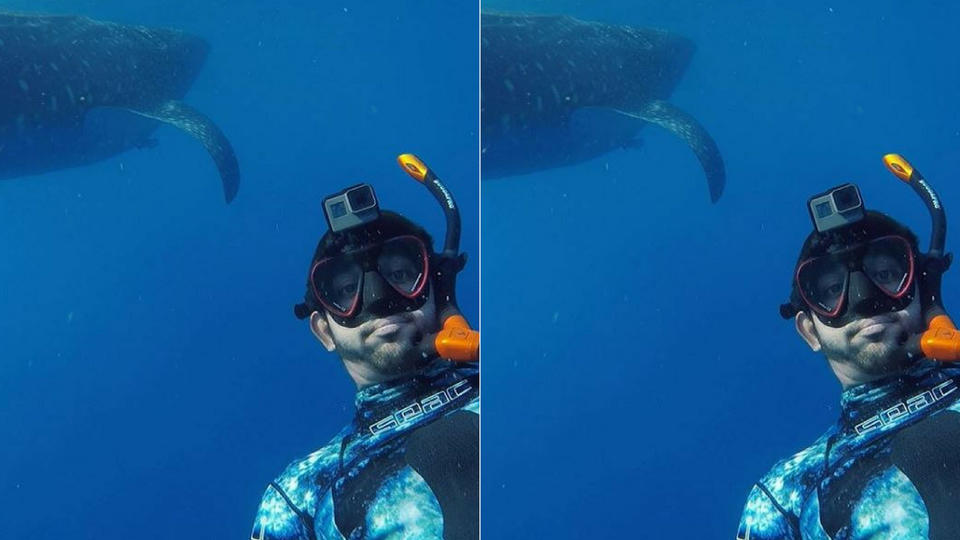 شاهدي: ولي عهد دبي يسبح مع أسماك القرش!