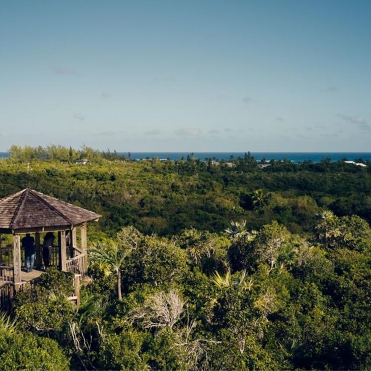 تقدم شركة آير بي أند بي لأحد المقيمين في دبي الفرصة للعيش في جزر الباهاما لمدة شهرين
